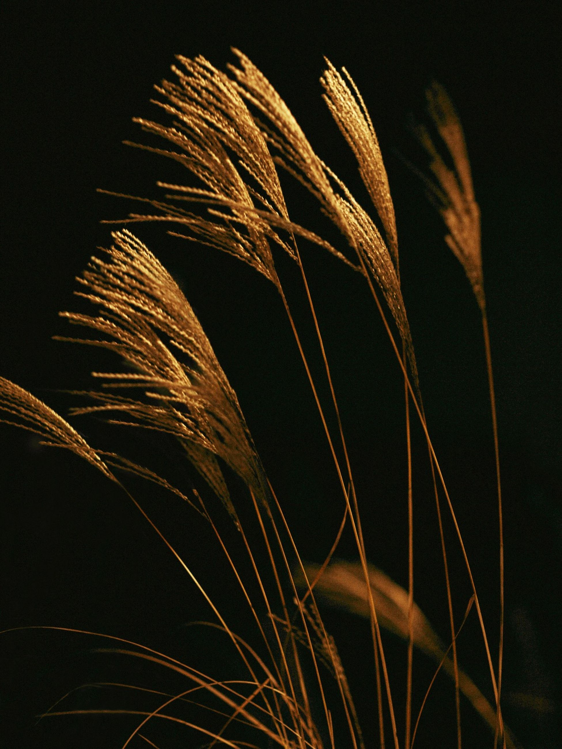night, close-up, no people, plant, growth, nature, beauty in nature, illuminated, focus on foreground, outdoors, grass, motion, sky, selective focus, studio shot, glowing, low angle view, dark, leaf, plant part, stalk