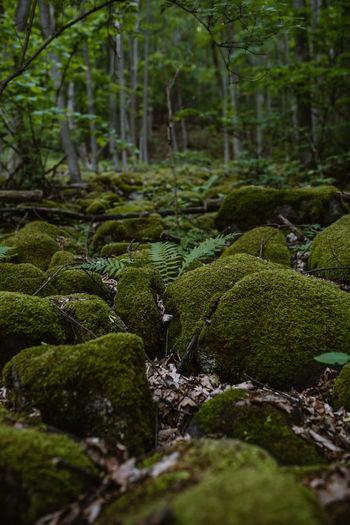 Moss growing on rocks in forest