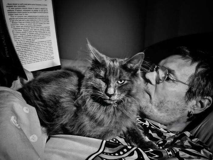 Reading with a cat Norvegianforrestcat Reading A Book Reading & Relaxing Reading & Cat Pets Feline Domestic Cat Relaxation Portrait Close-up At Home Sleeping Pet Bed Cat