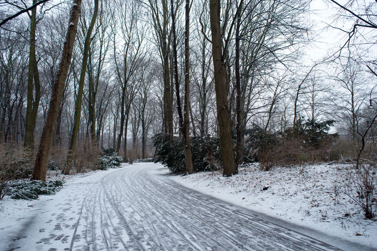 Beauty In Nature Berlin City City Life Cold Temperature Europe Garden Landscape Nature Road Snow Strees Streetphotography Tree Tree Trees Winter Winter