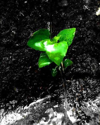 The life of leaf @mataponsel @mp_riau @gadgetgrapher_riau @gadgetgrapher_kepri Mataponsel Mp_riau Gg_telusurkepri_ Gg_telusurriau Coloursplash Mp_macro Mp_colorsplash