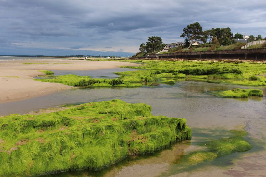 Nairn beach - the sun and colours were amazing! Nature_collection Nature Beachphotography Beach Nairn Scotland Nairn Scotland Bright Green Beachwalk Natural Beauty Colourful