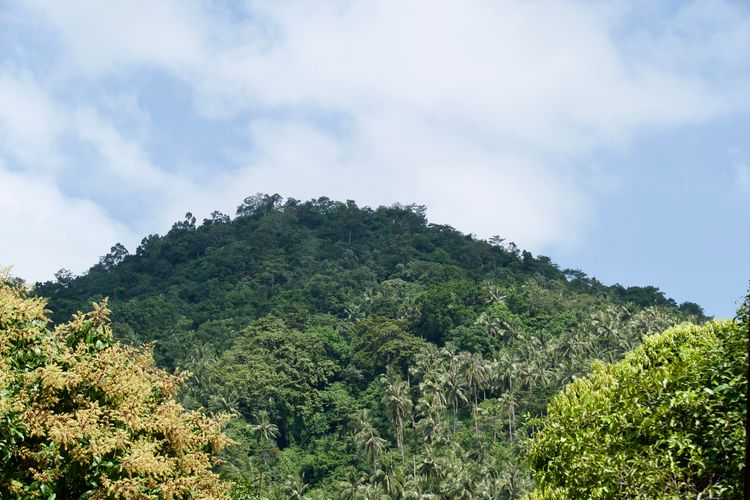 Tree Plant Sky Cloud - Sky Beauty In Nature Green Color Tranquility Growth Tranquil Scene No People Scenics - Nature Low Angle View Day Nature Non-urban Scene Mountain Foliage Outdoors Lush Foliage Environment Rainforest Thailand Landscape Mountain Range