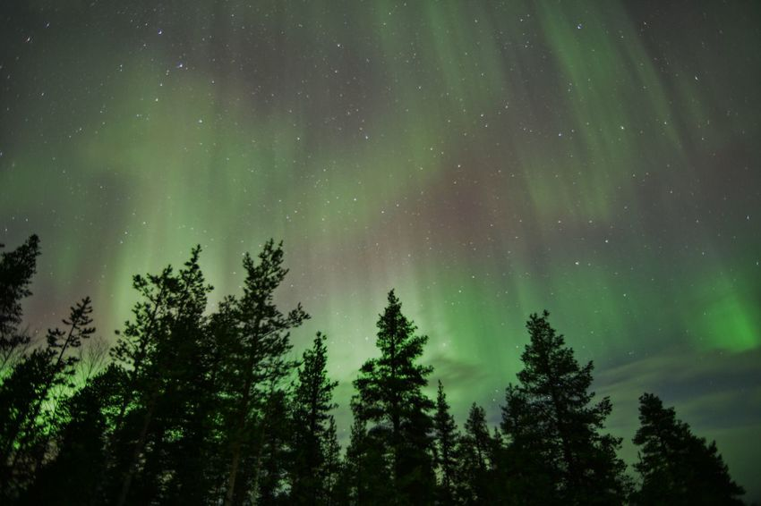 Astronomy Aurora Aurora Polaris Beauty In Nature Constellation Forest Green Color Green Light Greenlight Illuminated Landscape Milky Way Nature Night Nightscape No People Outdoors Scenics Silhouette Sky Space Space And Astronomy Star - Space Tree Treetop
