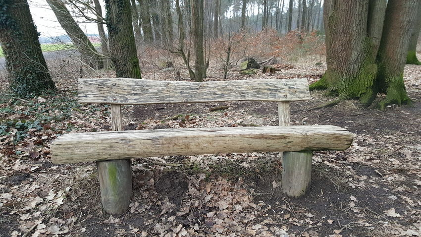 The wood bench is waiting for you 💑 Nature Outdoors Nature Tree Day No People Wood - Material Wood WoodLand My First Photo On EyeEm  Beauty In Nature Moments In Time! Plant My First Photo On EyeEm  First Eyeem Photo My First Photo On EyeEm  Spaß Am Leben  GERMANY🇩🇪DEUTSCHERLAND@ Leaf 🍂 Germany🇩🇪 Germany 🇩🇪 Deutschland Getty Images Getty+EyeEm Collection EyeEmNewHere Germany Photos Official EyeEm ©