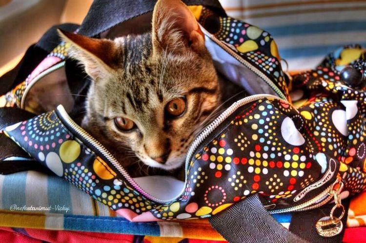 Haciendo el equipaje ? Cat♡ Hello World Eye4photography