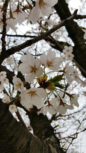 FlowerLove 🌸