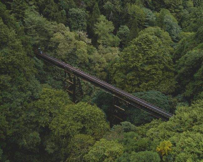 Railway bridge over trees in forest