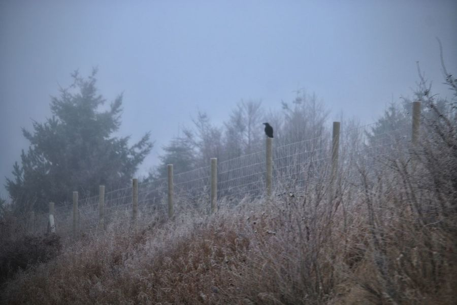 Krow Dezember 2016 Day Fog Nature Outdoors Cold Temperature Winter No People Landscape Sky Snow Beauty In Nature Tree Tranquility Tranquil Scene Check This Out Cold Winter ❄⛄ Frost Frosty Mornings Landscape_Collection Taking Photos From My Point Of View Moments Outdoors Photograpghy