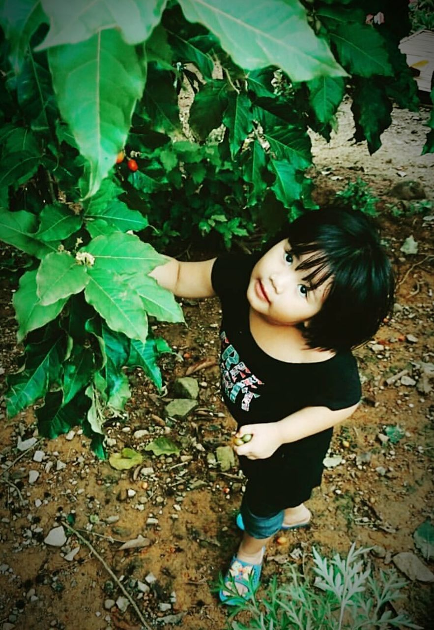 leaf, one person, plant, high angle view, day, standing, black hair, outdoors, growth, real people, girls, full length, childhood, tree, nature, freshness, young adult, people
