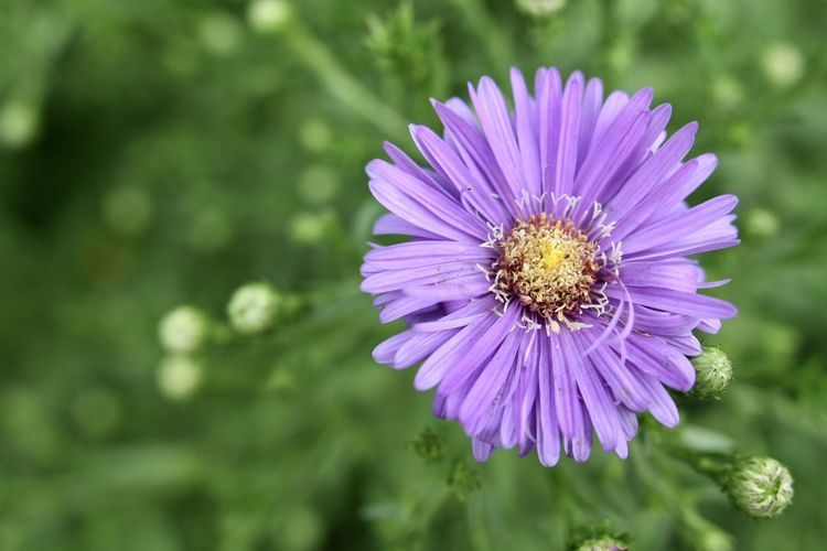 Close-up of purple pollinating flower