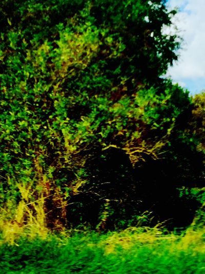 Nature Shots Green