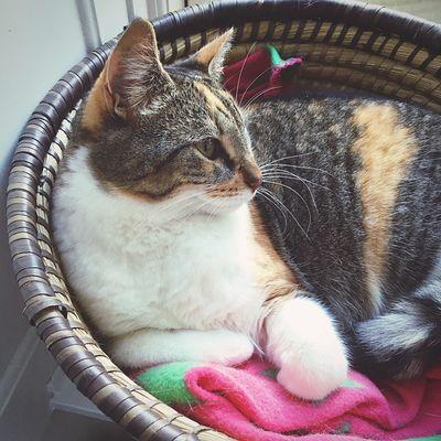 Cat Basket Cat In Basket Kitty Animal Pet Pet Portraits