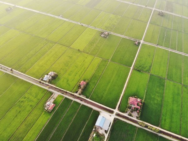 Aerial view of green paddy field Landscape Sun Sunlight View Outdoor Travel Travel Destinations Beautiful Aerial Shot Aerial Photography EyeEm Nature Lover EyeEm Selects Getty Images EyeEm Best Shots Beauty In Nature Rural Scene Agriculture Aerial View Field High Angle View Crop  Farm Grass Landscape Green Color Agricultural Field Cultivated Land Terraced Field Rice Paddy Plantation Rice - Cereal Plant