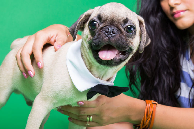 Preparing to the party Pet Pets Petting Caring Pet Care Pets EyeEm Selects Pets Protruding Portrait Friendship Young Women Dog Smiling Women Studio Shot Happiness Animal Tongue Pug Canine Lap Dog Pet Collar Puppy