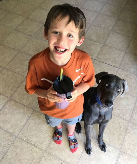 Weimaraner Together Smoothie Child Family Home Happy Happiness Dog Pets One Boy Only Children Only Males  Childhood Child Looking At Camera Smiling Portrait Cute Boys One Animal Animal One Person Domestic Animals Puppy People Indoors  Friendship