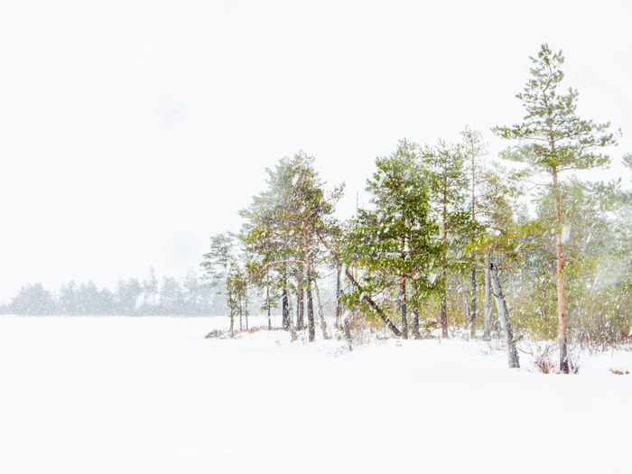 Winter trip through the Yelnya Swamp National Landscape Reserve, Belarus Tree Snow Plant Winter Cold Temperature Beauty In Nature Land Sky Tranquil Scene Nature Field White Color Landscape Day No People Snowing Outdoors Belarus Swamp Bogotá Forest Environment Non-urban Scene Yelnya