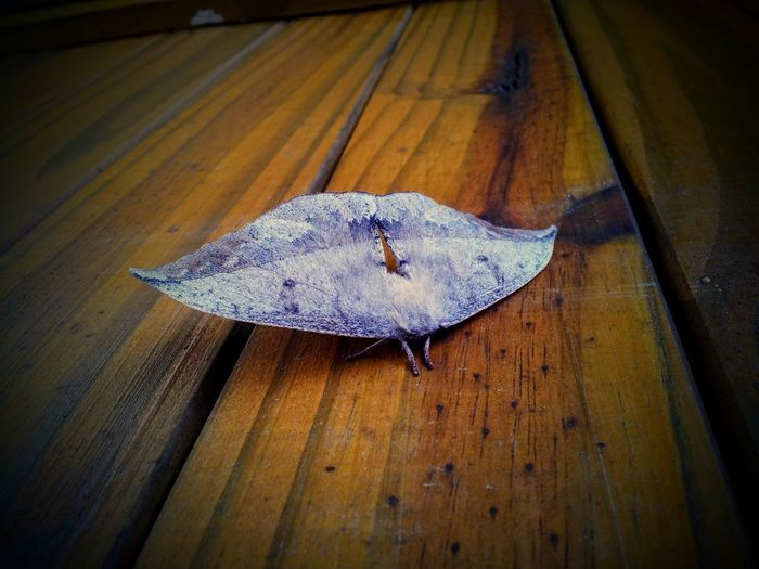 High angle view of dry leaf on wooden table