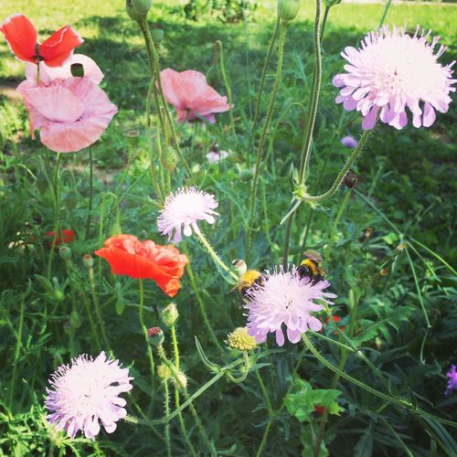 Flower Nature Beauty In Nature Summer Nature цветы Flowers Bee шмель