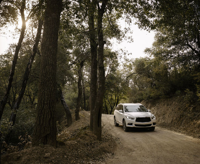 Cars on road amidst trees in forest