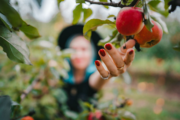 Close-up of woman hand reaching to apples on tree at farm