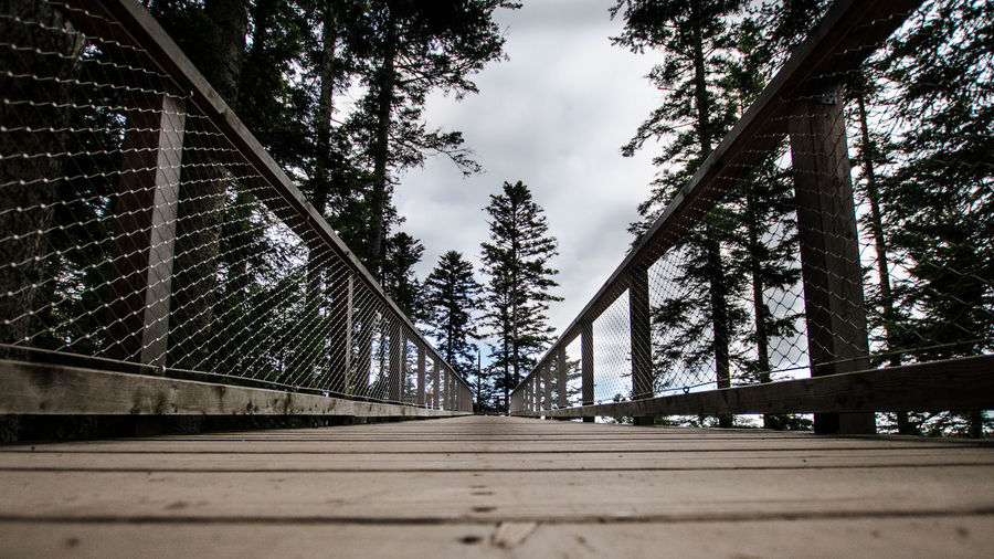 Tree Plant Architecture Bridge Connection Built Structure Sky Transportation Nature Bridge - Man Made Structure No People The Way Forward Direction Railing Day Road Footpath Cloud - Sky Outdoors Growth Diminishing Perspective Footbridge Surface Level