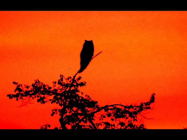 Subset Bird Warm Colors Touday Next Night