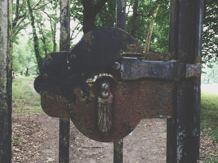 Metal Tree Old