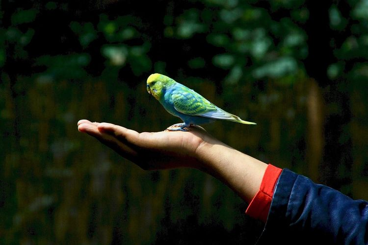 Human Hand Human Body Part Hand One Person Bird Focus On Foreground Outdoors Holding Bird On My Head Bird On My Hand Cute Animal