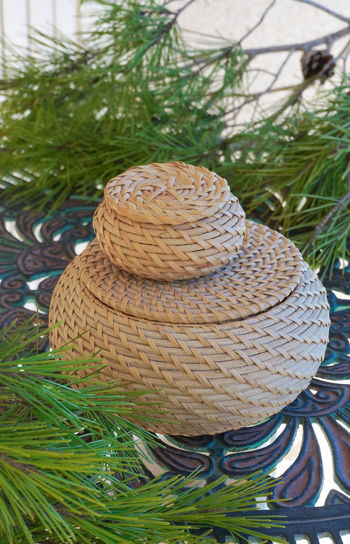 High angle view of hat on tree trunk