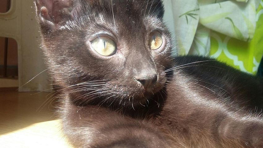 No Filter Cute Cat Beautiful Check This Out Taking Photos Sunny Blackcats Green Eyes Blackcatlove