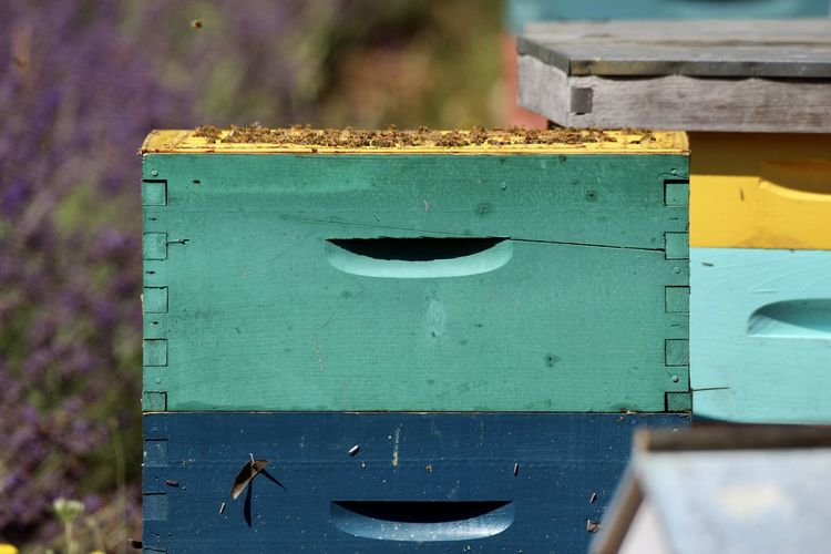 Close-up of birdhouse against blue background