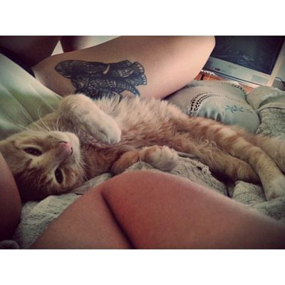buen dia otto mielcita Cat Beauty Love Morning bed picoftheday girlswithtattoos tattooed