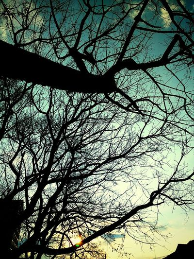 Evening Nightfall Tree Branch Flower Backgrounds Silhouette Sky Treetop Upward View