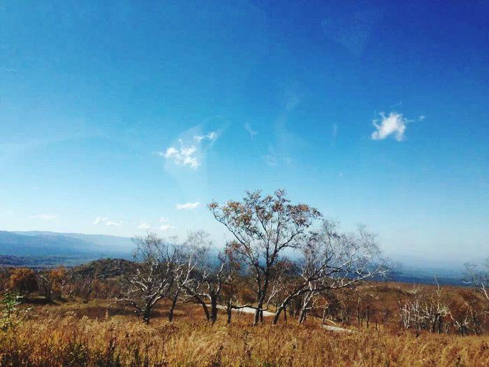 白山 Baishan Beauty In Nature Tree Growth