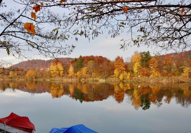 EyeEmNewHere Reflection Autumn Beauty In Nature Branch Carddesign Change Colorfultree Day Indiansummer Lake Leaf Maple Nature No People Orange Color Outdoors Reflection Scenics Sky Tranquil Scene Tranquility Tree Wallpaper Water Waterfront EyeEmNewHere EyeEm Ready