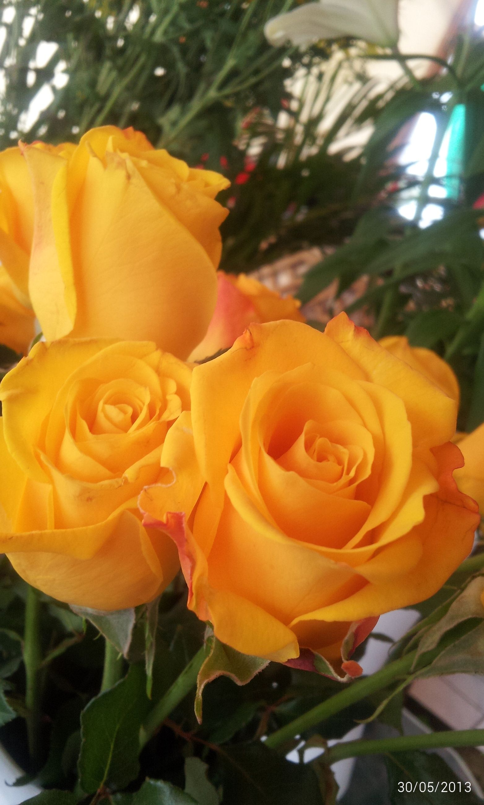 flower, petal, flower head, fragility, freshness, rose - flower, growth, beauty in nature, blooming, close-up, plant, nature, yellow, focus on foreground, in bloom, single flower, park - man made space, leaf, rose, blossom