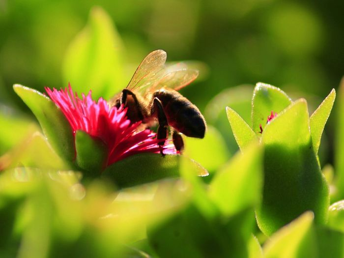 Nature Insect Bee Plant Beauty In Nature Nature Maximum Closeness Macro Bee In A Flower Flower