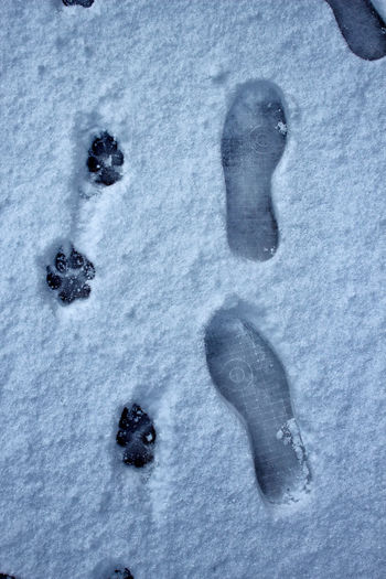 🐾👣 Close-up Cold Temperature Dogs Of EyeEm FootPrint Footprints In The Snow No People Outdoors Paw Print Snow Snow Covered Snow Day Snow ❄ Tracks In Snow Winter Pet Portraits