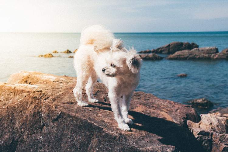 Animal Themes Beach Beauty In Nature Day Dog Domestic Animals Full Length Horizon Over Water Mammal Nature No People One Animal Outdoors Pets Rock - Object Sea Sky Water