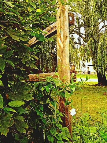 TGI Fence Post Friday Good Morning Beautiful People For My Friends That Connect Have A Nice Weekend TOO MANY GREAT FRIENDS TO TAG ..I ALWAYS FEEL LIKE I'M EXCLUDING SOMEONE ..SO I TAG YOU ALL ♥♥♥ FOR TGI FPF ! HOPING EVERYONE IS ENJOYING THEIR DAY :-)) GROUP HUG ♥ NAMASTE ♥