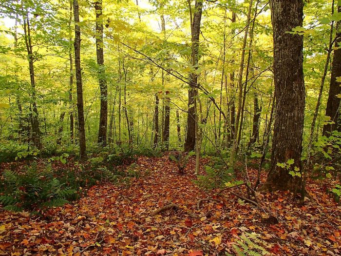 Couleurs d'automne - Fall Foliage Foliage Fall Colors Plant Tree Growth Land No People Beauty In Nature Nature Forest Autumn Scenics - Nature Outdoors Leaf