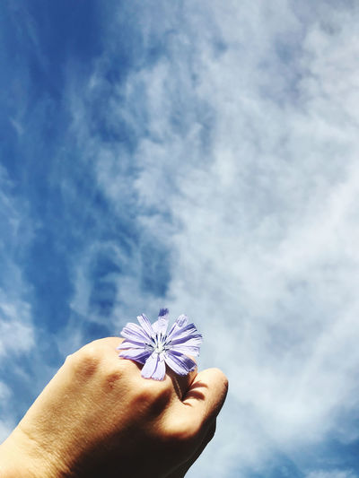 Close-up of hand holding purple flower against blue sky