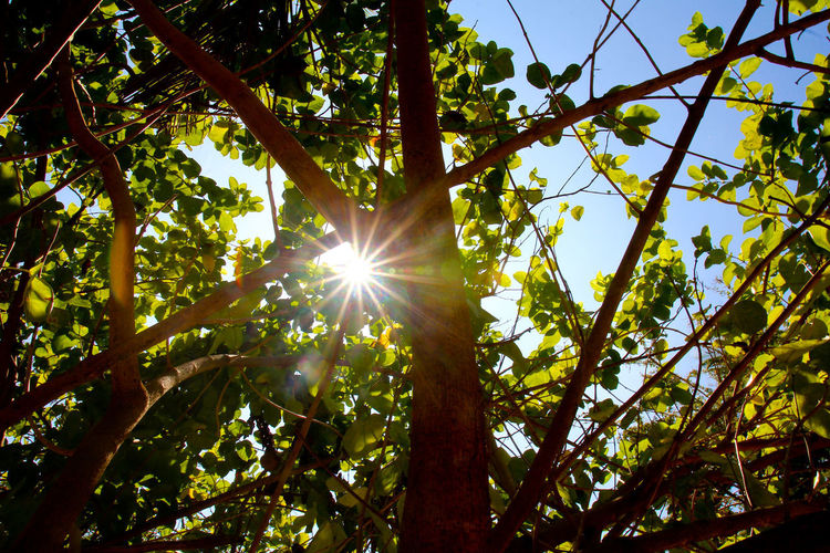 Tree Plant Low Angle View Sunlight Nature Sun Sunbeam Beauty In Nature Lens Flare No People Branch Sun Star