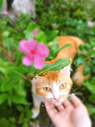 My cat My Cay One Person One Animal Plant Mammal Domestic Animals Human Hand Pets Cat Hand Holding Flower Body Part The Mobile Photographer - 2019 EyeEm Awards