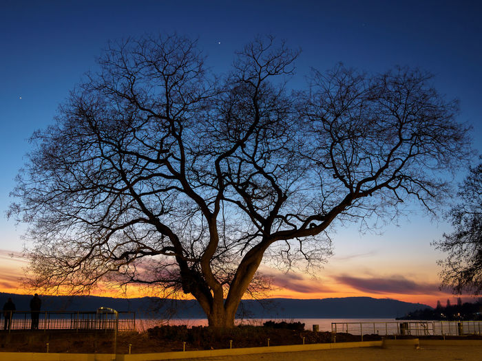 Silhouette bare tree by lake against sky during sunset