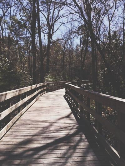 captured by me Bare Tree Railing Wood - Material Boardwalk vanishing point Narrow Wood Walkway Treelined The Way Forward Diminishing Perspective Long Woods Arch Bridge