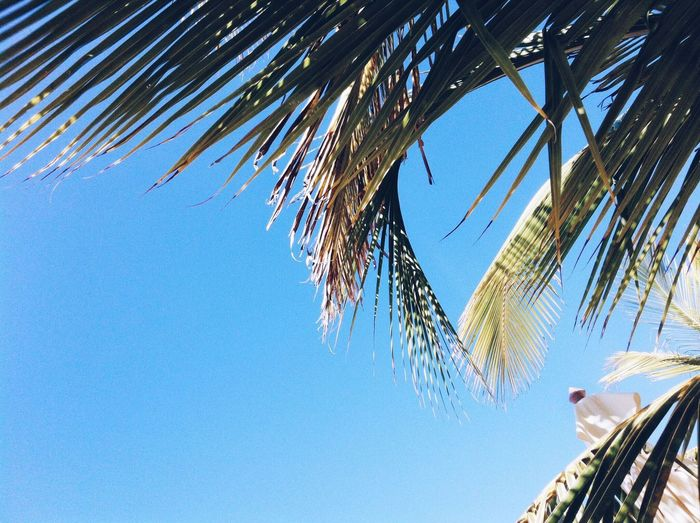 Low Angle View Palm Tree Blue Day Sky Clear Sky Tree No People Outdoors Sunlight Architecture Nature Building Exterior Beauty In Nature Sommergefühle