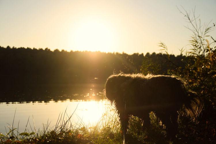 Animal Sunset