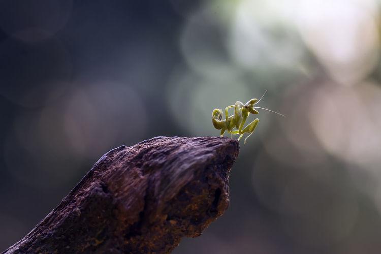 Praying mantis pose on beautiful place